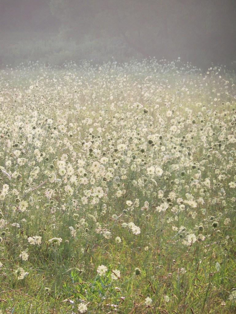 flowersforharrelddinkins