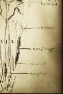 notes for drawing a whale skeleton from 2002