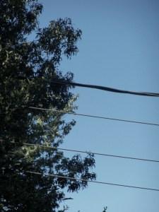 trees 014